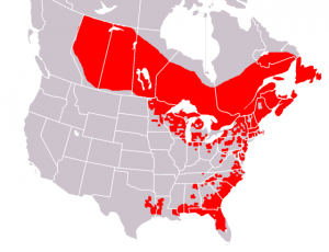 Range of Sarracenia