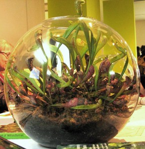 Is A Venus Flytrap Terrarium A Good Idea The Carnivore Girl
