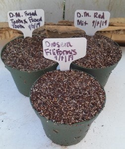 Carnivorous Seed Pots