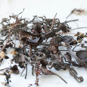 Dead Flytrap Clippings
