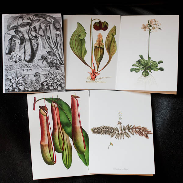 Carnivorous Plant Stationary Cards
